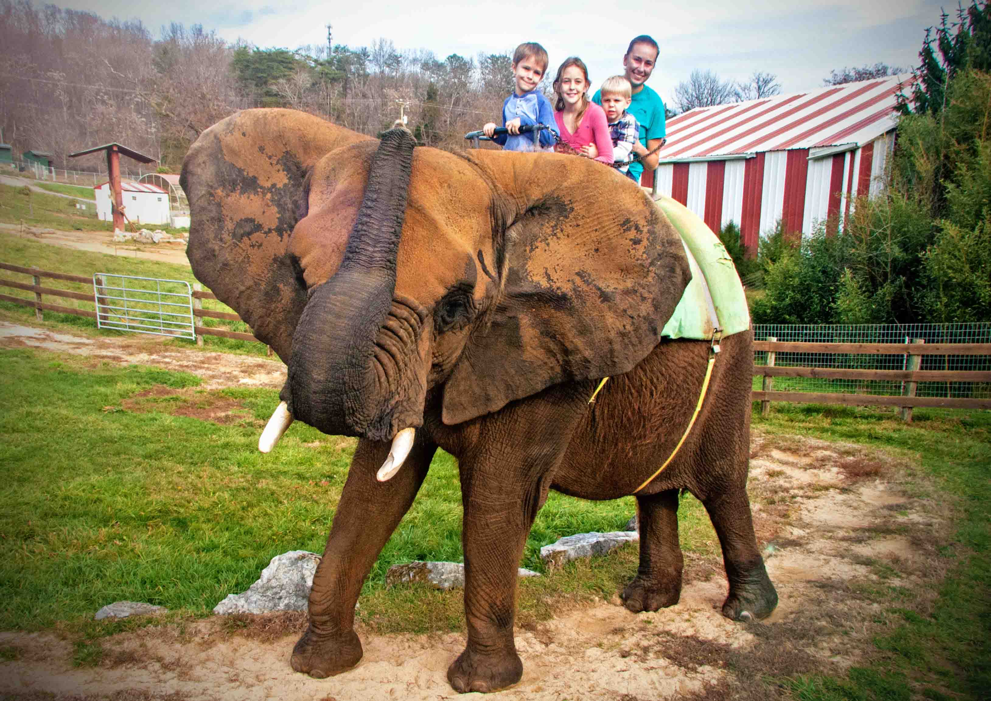 African Elephant Rides  African Elephan...